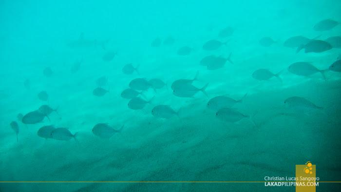 Sun Island Resort Maldives Snorkeling