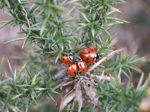 Photo: Ladybirds