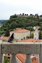 Photo: Gołąbek też chciał być uwieczniony na tle zamku ;-)