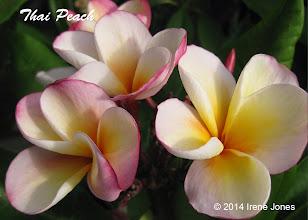 Photo: Thai Peach - San Diego, CA - North County Coastal