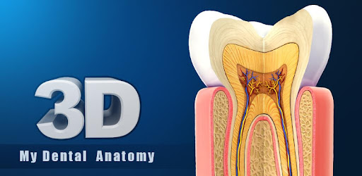 My Dental Anatomy By Visual 3d Science Medical Category 144