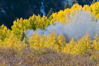 Photo: Train chugs through grove of aspens