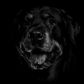 goa by Niclas Ådemark - Animals - Dogs Portraits ( aik )