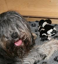 Photo: die Cini mit ihren Mäusen :)