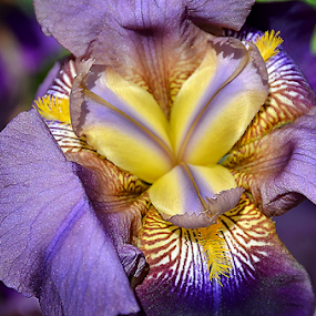 by Theresa Stevens - Flowers Single Flower (  )