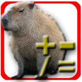 Capybara Calculator