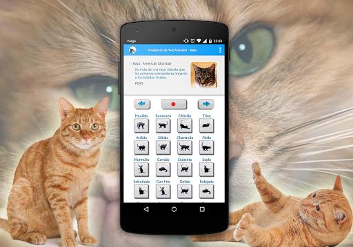 人類對貓的聲音翻譯