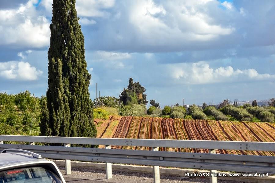 Путешествие на север Израиля. Дорожный пейзаж.