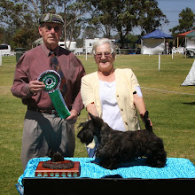 Photo: Best Junior, GILLECKY BEABEA DE LACY owned by Gillian Sanders