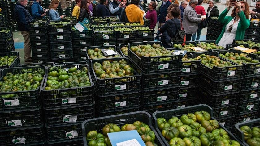 El tomate  es el producto estrella de la cooperativa agrícola de La Cañada.