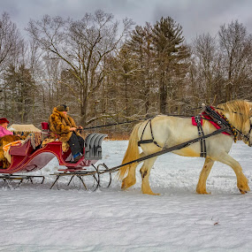 Antique sleigh by Rich Reynolds - Transportation Other ( red, snow, horse, sleigh, antique )