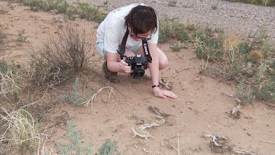 Photo: Ischelle taking a photo of the horny toad.