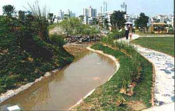 Photo: CHN-UR05 Drainside vetiver in Park in China