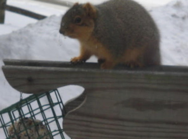 Squirrel It Away  Suet Feeder Food Recipe