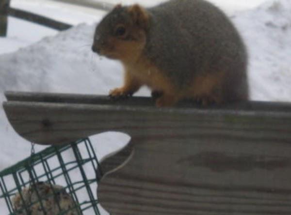 Squirrel It Away  Suet Feeder Food Recipe