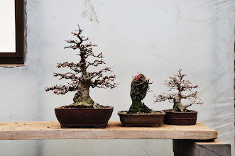 Photo: Cynthia and I visited a bonsai incubation center.