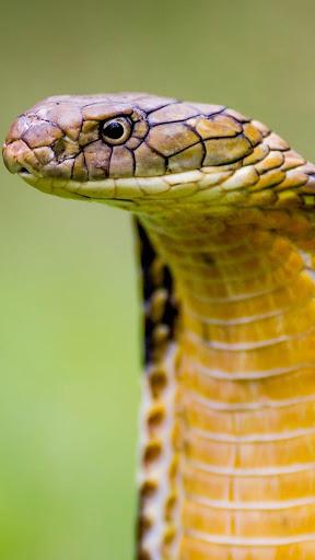 蛇 动态壁纸
