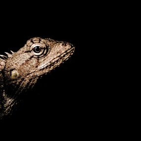 :: K I L L E R :: by Rahul Chakraborty - Animals Reptiles ( FocusStacking,  )