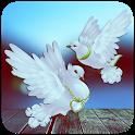 Pigeon Wallpaper HD icon