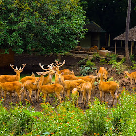 Prestigious poses by Sajal Porwal - Animals Other Mammals ( deer, orange, forest, green, family )