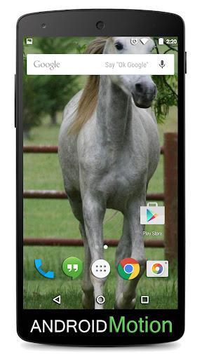 玩個人化App Horse Background免費 APP試玩