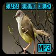 Suara Burung Ciblek Pemikat Mp3