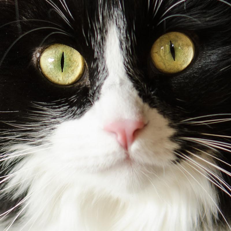 Sguardo felino di utente cancellato