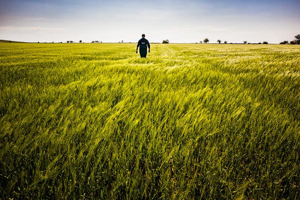 Perso in un campo di grano di Dario Lo Presti