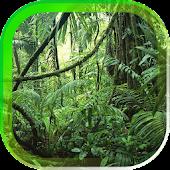 Jungle Nature live wallpaper