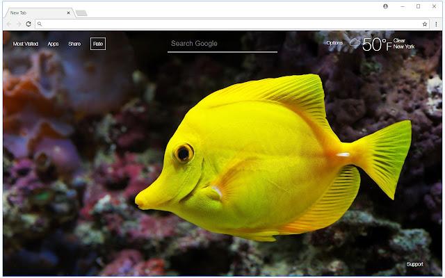 Fish Wallpapers HD New Tab Themes