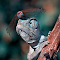 DSC_8208-büyük2.jpg
