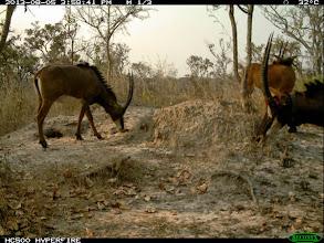 Photo: Young breeding females! Jovens fêmeas reprodutoras!