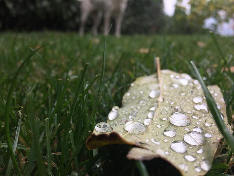 Raindrop di marly220190