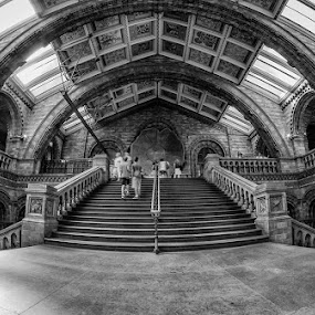 The natural history museum  by Barry Jones - Buildings & Architecture Public & Historical ( b&w, london, fossil, dinosaurs, museum,  )