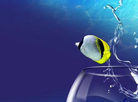 Aqua Fish 3D