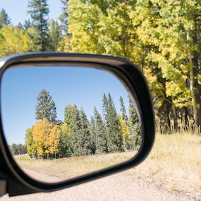 Last Look by Greg Johnson - Landscapes Forests ( mirror, reflection, rearview, highway, green, arizona, trees, forest, yellow, road, aspens, view )