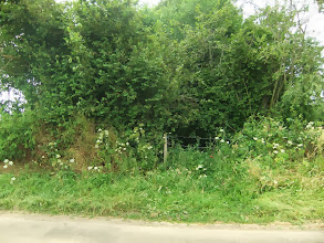 Photo: This is  a lane between two hedges that has not been used for while.  It has become filled with undergrowth.