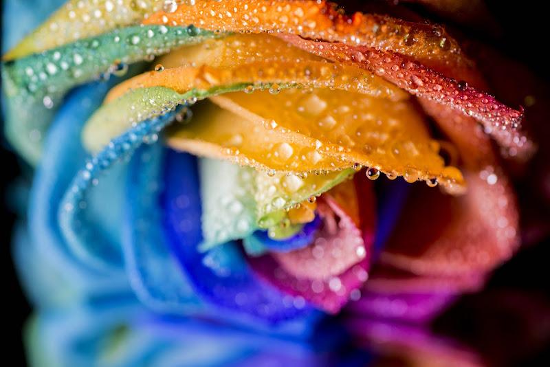 arcobaleno di Cinzia_torelli