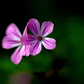 Purple flowers by Nick Hogg - Flowers Flowers in the Wild ( macro, macro photography, purple, purple flowers, canon )