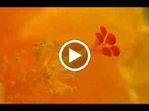Video: A. Vivaldi  Op. 8 n. 9 - Concerto for violin, strings   b.c. in D minor (RV 236)   English Concert -