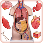 App Human Anatomy Body Parts Guide APK for Windows Phone