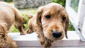 Puppy Smart thumbnail