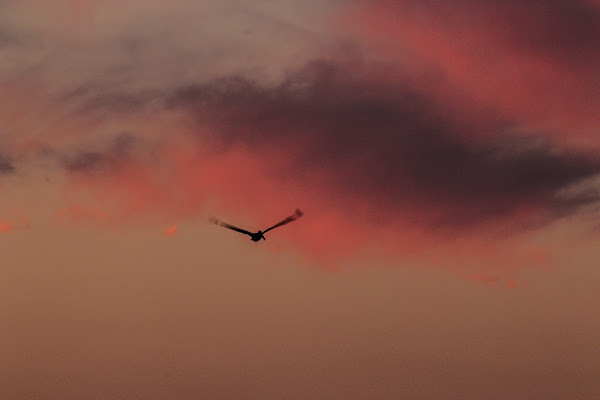 Pink Sky  di Renata Roattino@jhonninaphoto