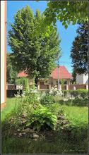 Photo: Calea Victoriei, B15 - spatiu verde - 2017.06.15