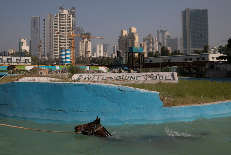 A groom leads his horse in the equine pool during a training session in Mumbai.