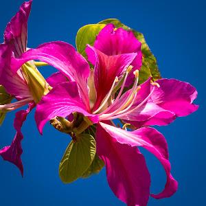 Pink Flower-3.jpg