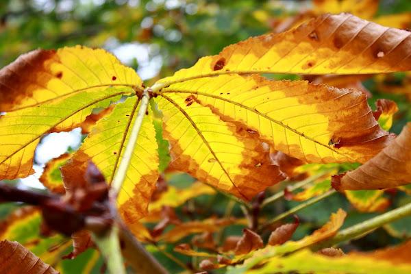 le foglie in autunno di ariosa