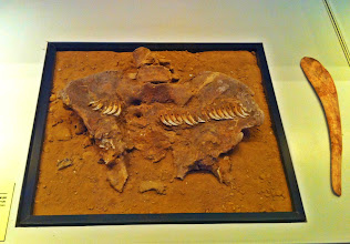 Photo: 1. The Dawn of Civilization. Female pelvis decorated in fox teeth.
