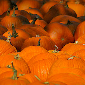 Lots 'O' Pumpkins by Michael Lemm - Public Holidays Halloween