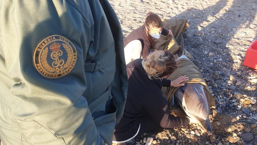 Equinac intentó socorrer al delfín varado en la playa Barranquilla.